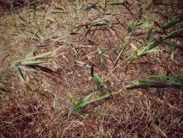 Grasses In The Cold Breeze by livinglove99