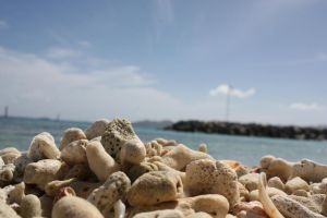 Shells and Coral by Andythegoofr