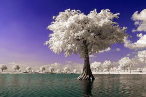 Island Tree by helios-spada