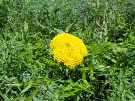 Brilliant Yellow Weed by Geak-of-Nature