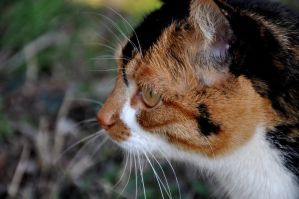 Perfect profile by April-Hennigan