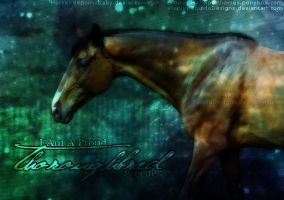 Version: Thoroughbred by EquideDesigns