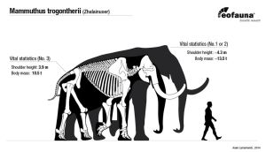 Songhua River Mammoths body size by EoFauna