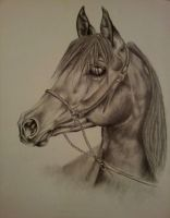 Horse Portrait by Ragnoria