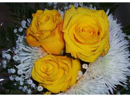 mellow yellow 2... by FeliFee
