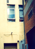 She wrote love on her window. by wednesday-lior