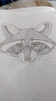 racoon sketch by MLPakroma