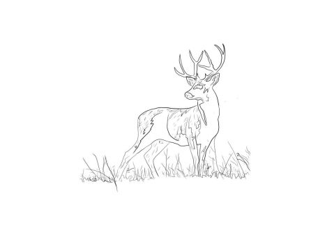 A Stag by LowBFlat