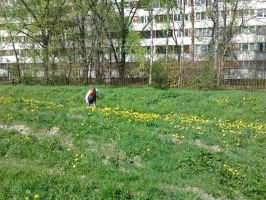 Girl with dandelions by Dream-tyan