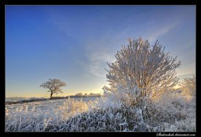 Frost Sunrise by Shahenshah