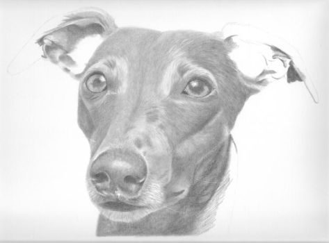 Whippet WIP 2 by Karentownsend