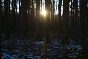 Sunset Forest 1 by SelvaStock