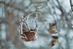 Frozen by yagahara