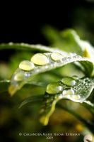 Morning Dew Drops II by Mocca-Coffee