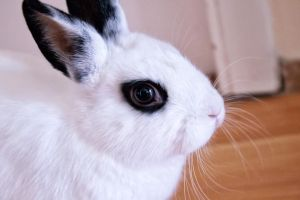 White Bunny by sztewe