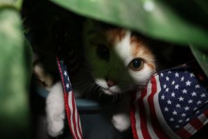Kitten and the Flags by Rika35