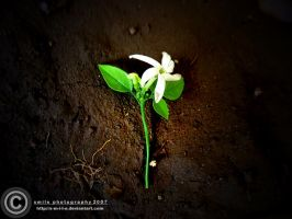 Flower On The Grave by s-m-i-l-e