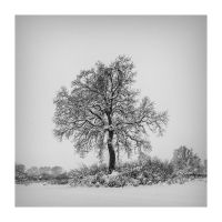 White vs. Black by Ikabe
