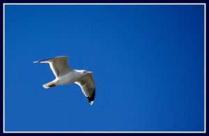 .Mouette by Croc-blanc