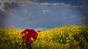 from yellow to red by andreasbf