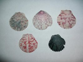 Seashells-2 by Rubyfire14-Stock