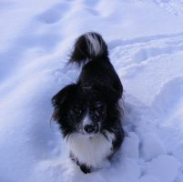 My dog plays in the snow by lishagran