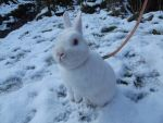 Miffy in the snow by Candyfloss-Unicorn