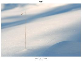 Scrap - Photo 0237 by wroth