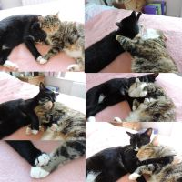 my cats are too cute omg by Streamwhisker