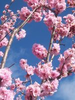Blossom. by Allexaire