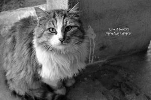Serious cat by Roby0309