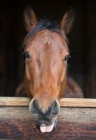 Photography::Brownie by SilverSummerSong