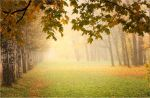 Autumn view... _37_ by my-shots