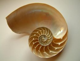 requiemstock - Nautilus-Shell2 by requiemstock