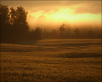 Mist and Golden Field by wb-skinner