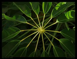 Green beauty by Aderet