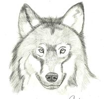 Dances with wolves by KINLINK