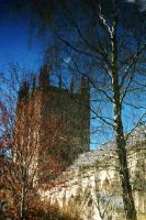 Birch and Cathedral by EarthHart