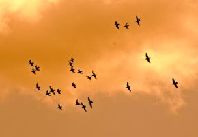 Sky and birds 4 by Quinnphotostock