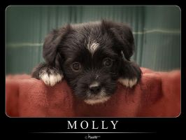 Molly by Kaslito
