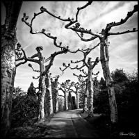 Mainau by VooDooMania