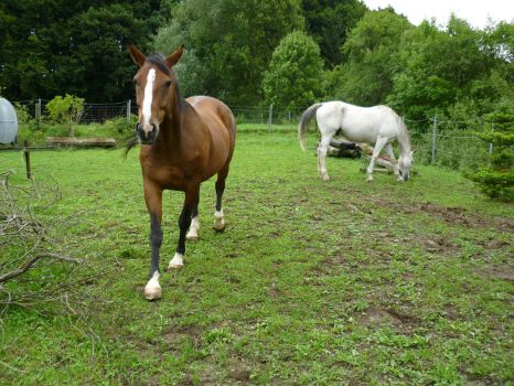 Animals - Horses 05 by Stock-gallery
