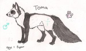 Ref sheet for Toma by Crazywolfs