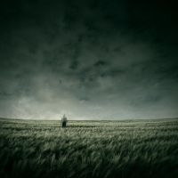 Field of the lonely one by theflickerees