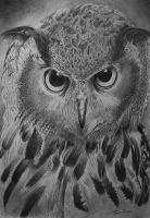 Owl - Pencil by timohuovinen