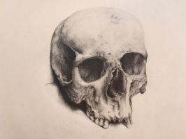 Human Skull by backhendl
