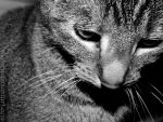 Meow in black and white by TheLarii