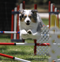 AKC Agility Trial 12 by Deliquesce-Flux