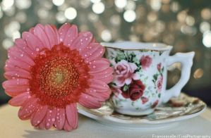 Tea time ..:gerbera version:.. by FrancescaDelfino