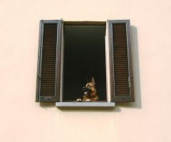 A Dog at the Window by Alcyone07